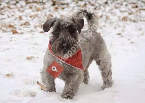 Doggie Pinups Pet Photography
